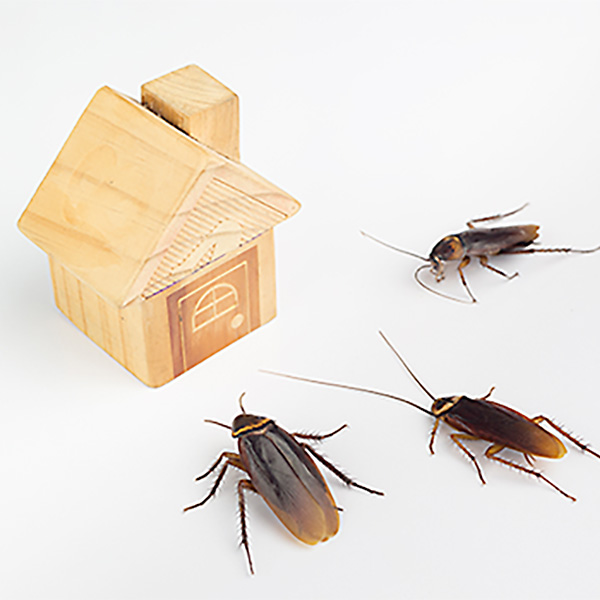 Cockroach Exterminator Virginia Beach
