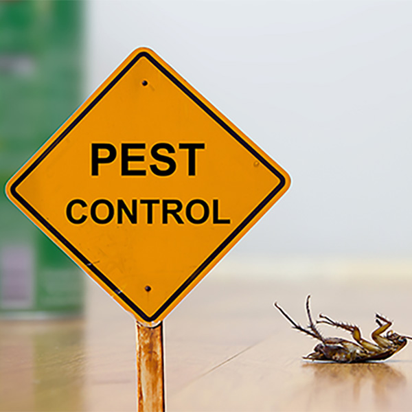 Local Pest Control Services Virginia Beach