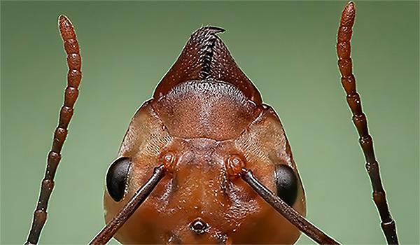 Professional Ant Exterminator Virginia Beach