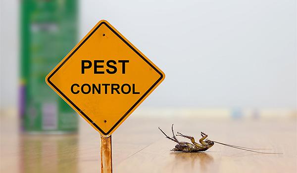 Virginia Beach Pest Control Services
