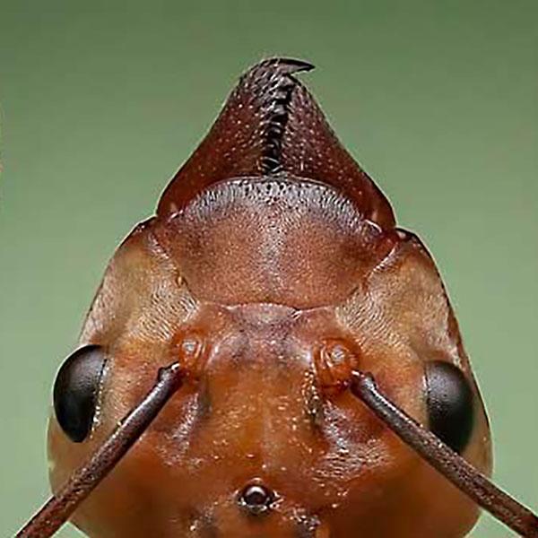 Virginia Beach Ant Exterminator