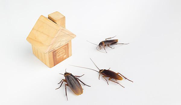 Virginia Beach Cockroach Exterminator
