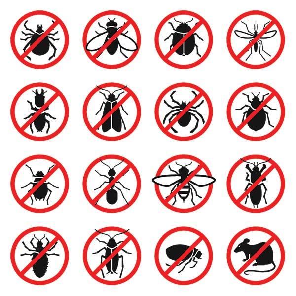 Virginia Beach Pest Control Company