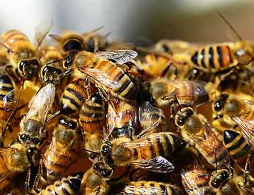 Let's Talk Pollinators